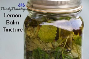 Post image for How to make Lemon Balm Tincture
