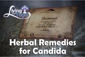Post image for Herbal Remedies for Candida