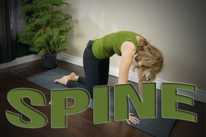 Post image for Yoga Classes for Your Spine