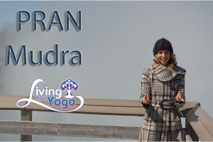 Post image for Pran Mudra
