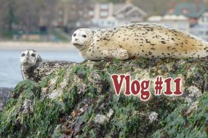 Post image for Deserted  Islands & Snow in Victoria on Vlog#11