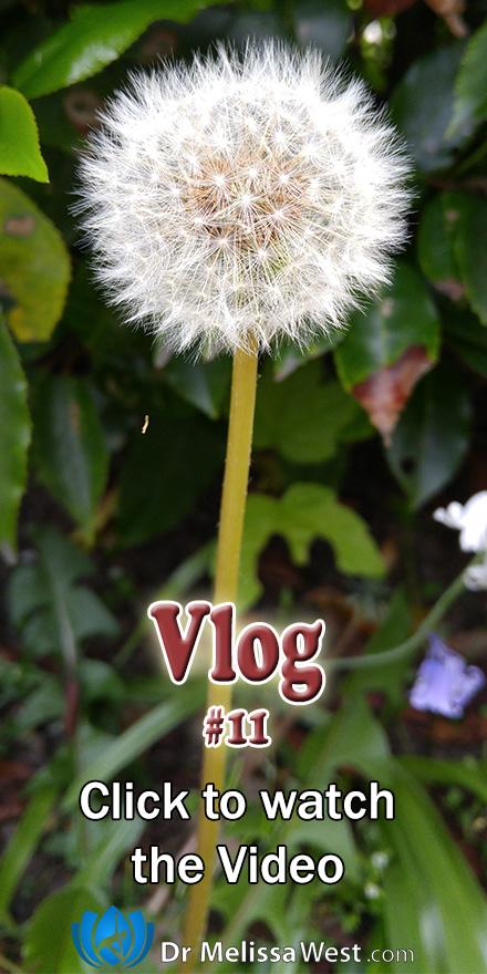 Vlog11