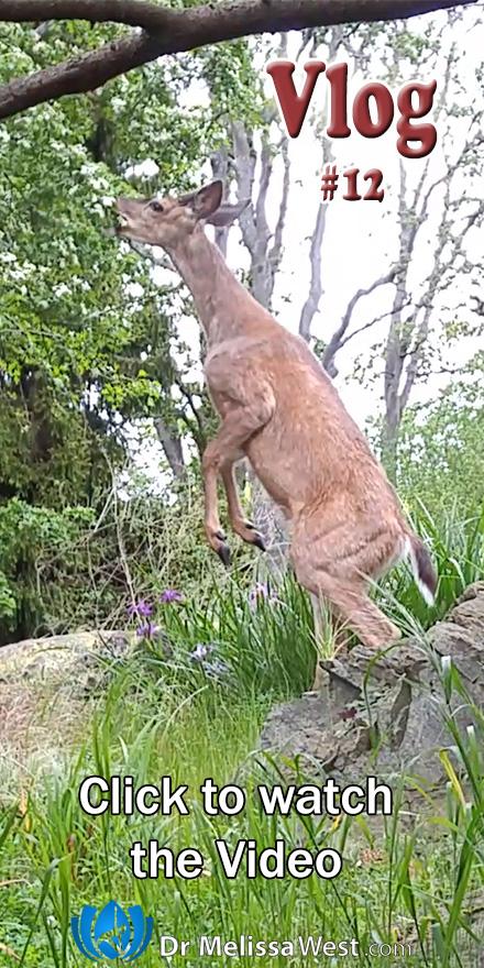 Vlog12-Deer