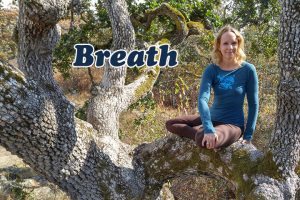 Post image for Back to School Yoga: Science Class: How to Breathe, Intermediate Yoga Class, Yoga with Melissa 347